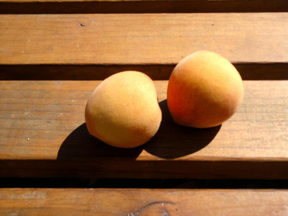 Our Garden Is Just Peachy